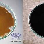 Licorice Powder Liquid Paste
